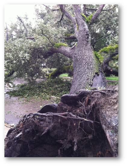 130812 Tree Crushes Car 1